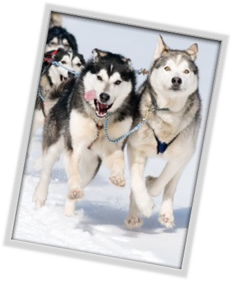 Learn to run a dog team while exploring the southern edge of the largest forest region in Canada, the boreal forest. 